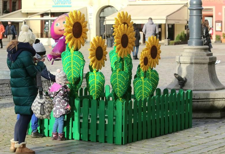 Dziś obchodzony jest Dzień Życzliwości. Obok mieszkającego na stałe na wrocławskim Rynku krasnala Życzliwka wyrosły słoneczniki