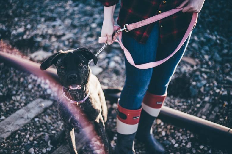 Macie psy? Zdawaliście sobie sprawę z pewnych obowiązków? Niektórzy niestety zapominają, chociażby o tym, że wychodząc z psem na spacer, powinien być