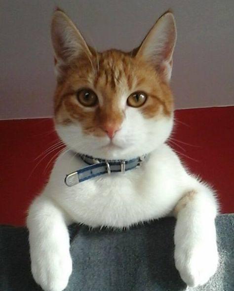 Na ul. Wojska Polskiego zaginął kot Whisky. Zatroskana właścicielka prosi o pomoc (zdjęcia)