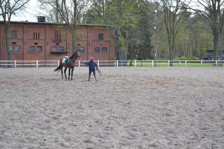 Trzydzieści lat temu w Stadzie Ogierów przebywało 120 koni, dziś jest ich 29, wiele z nich zostało wydzierżawionych