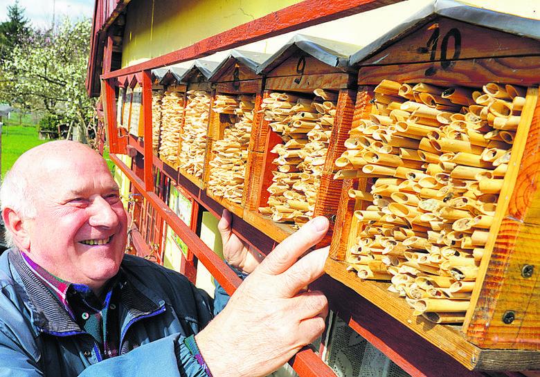 Stanisław Grygorcewicz ma dziesięć domków z pszczołami murarkami.