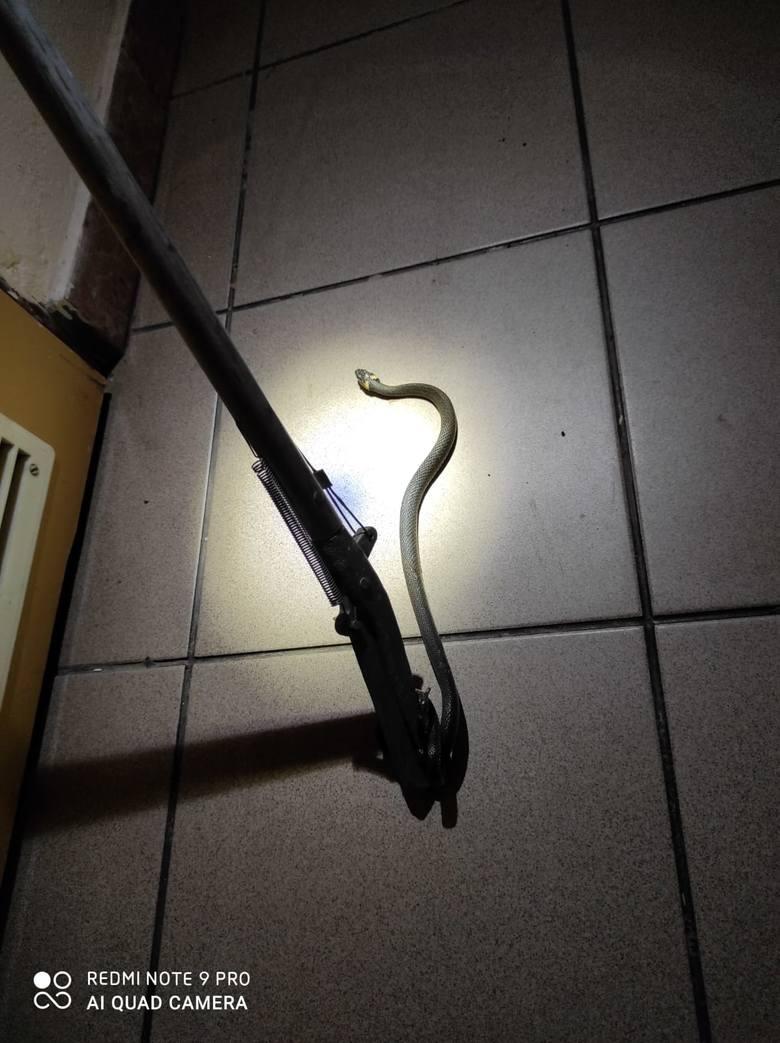 Polanka. Strażacy wezwani do węża w mieszkaniu [ZDJĘCIA]