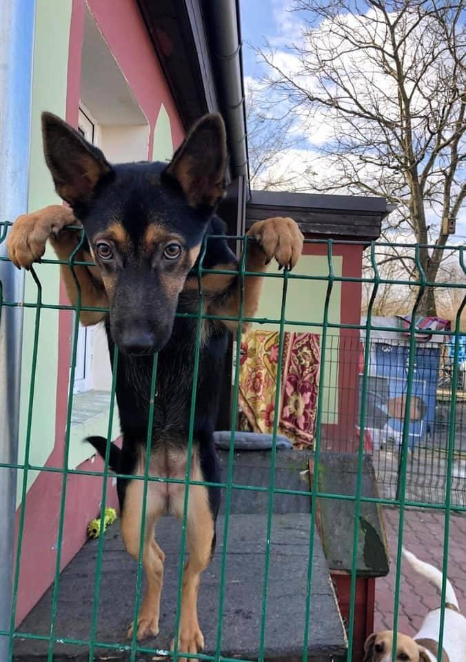 Robert Białczak z gorzowskiego schroniska Azorki zachęca do wzięcia psa do domu tymczasowego
