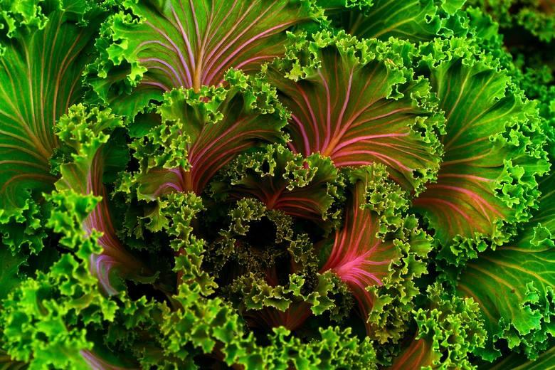 Jarmuż i inne warzywa liściaste należą do produktów najbogatszych w związki odżywcze, które są niezbędne do zachowania dobrego wzroku