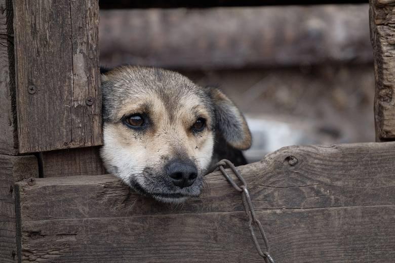 Łańcuch dla psa ma mieć 5 metrów. Burek i Mruczek dostaną czipy. Zmiany w ustawie o ochronie zwierząt