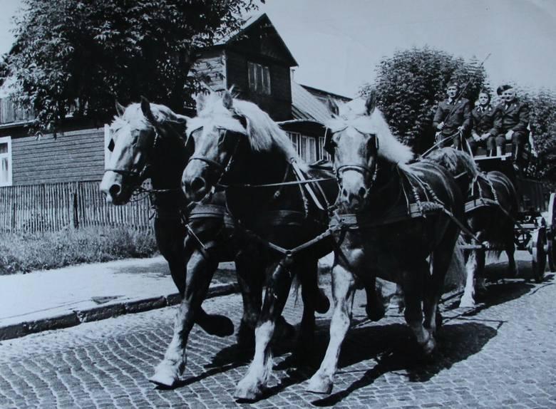 Pokaz koni w Sokółce