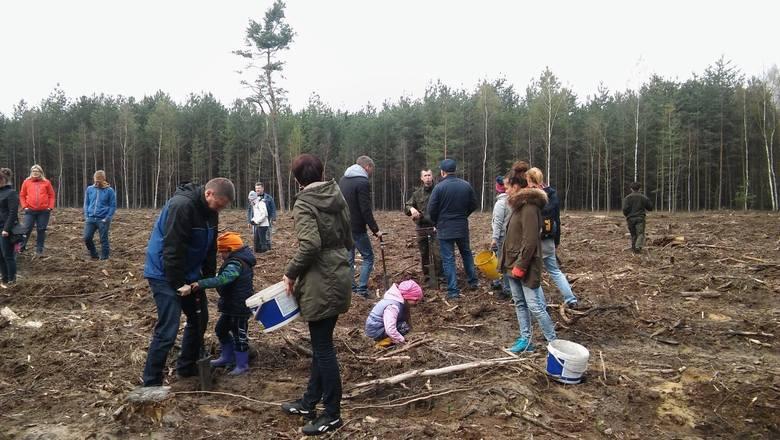 mat. prasoweW sobotę, 9 kwietnia na terenie leśnym w Zielonej Górze Chynowie odbyła się akcja sadzenia drzewek. Brała w niej udział także grupa przedszkolaków