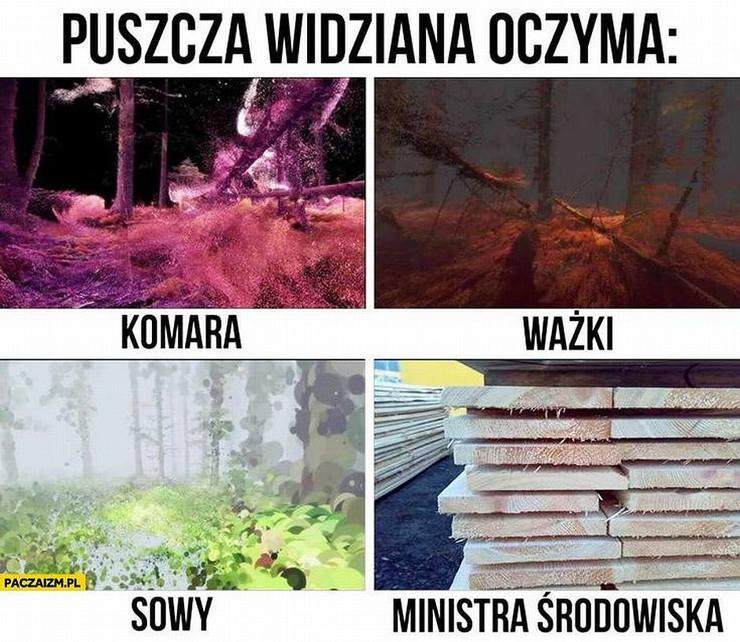 WYcinka drzew i Minister Szyszko - najlepsze MEMY
