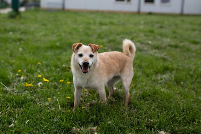Szukasz czworonożnego przyjaciela? Zajrzyj do wrocławskiego schroniska. Jest tam mnóstwo psów, które czekają na nowy, kochający dom. Zrobiliśmy im zdjęcia,