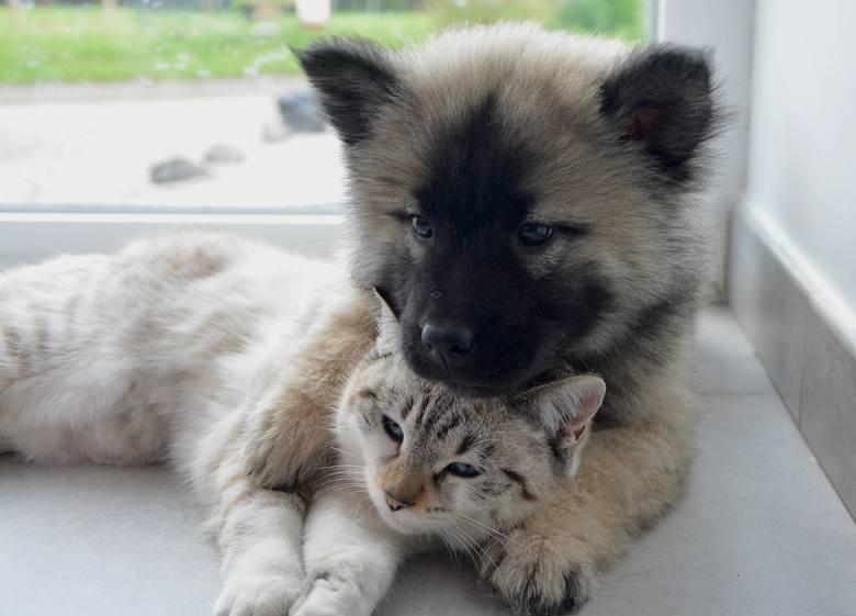 wynajem mieszkania zwierzęta