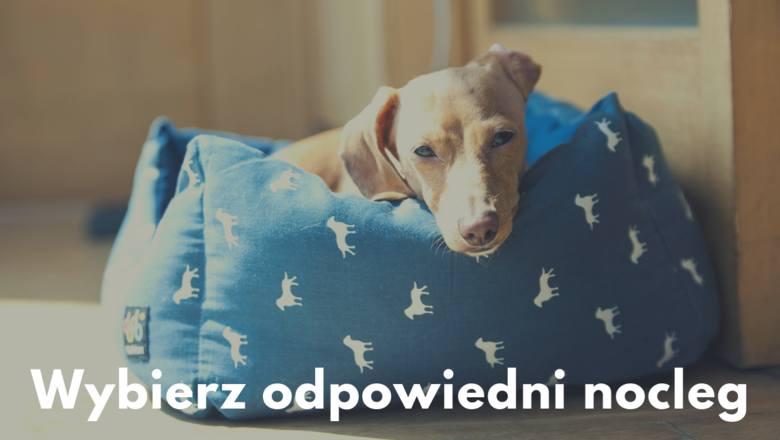 Skorzystaj z wyszukiwarki hoteli i wybierz miejsce przyjazne psom. Również i w Polsce istnieją pensjonaty znakomicie przystosowane do urlopu z pupilem.