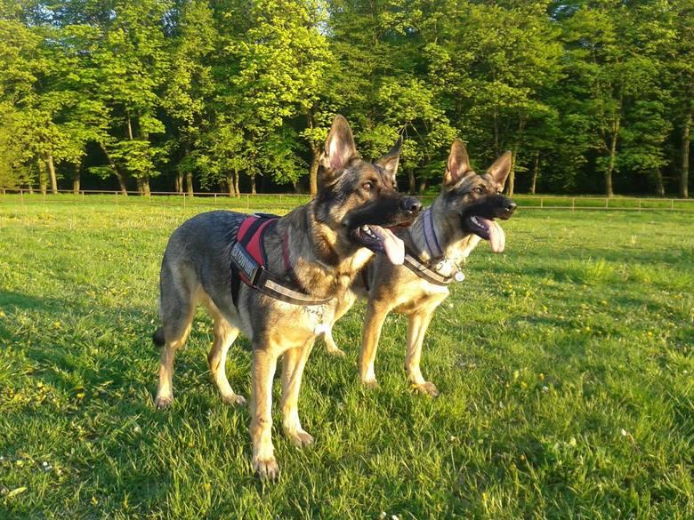"""Psy ratownicy pracują także w Trójmieście. """"Nikt nie wymyślił nic lepszego od jego nosa"""""""