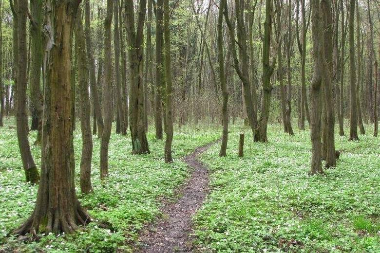 Będą zmiany w Lesie Zwierzynieckim