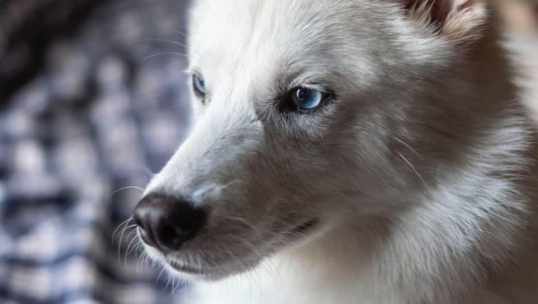 Krzyżówki ładniejsze od rasowych psów? W tych kundelkach się zakochasz