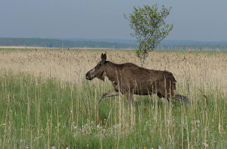 Zwierzęta województwa łódzkiego, czyli nasze ubożejące bogactwo