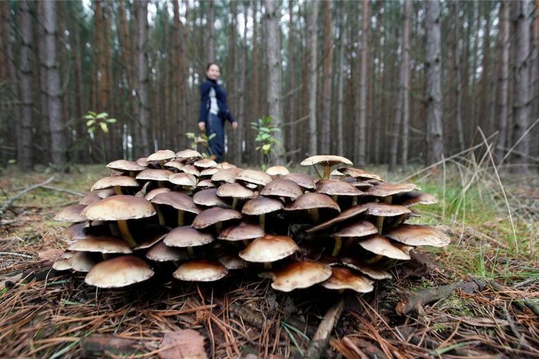 Tak czy siak grzybów powinniśmy szukać w konkretnych miejscach