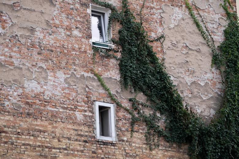 Zielona ściana kamienicy przy ul. Stalowej w Warszawie