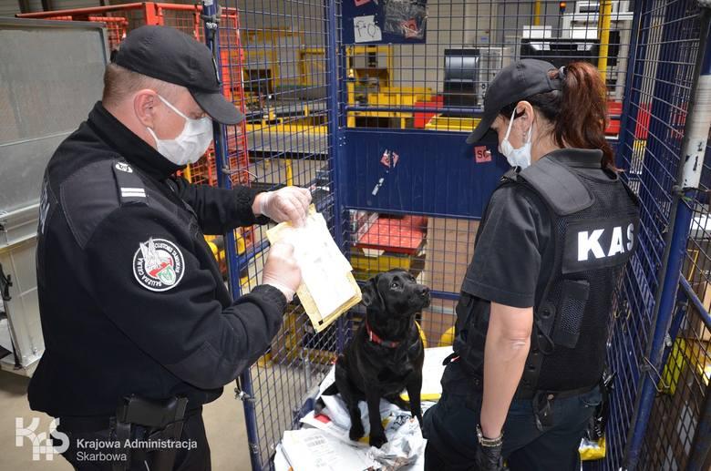 Narkotyki, sterydy, wyroby medyczne oraz podrobione towary skonfiskowali funkcjonariusze z Urzędu Celno-Skarbowego w Toruniu w czasie kontroli przesyłek