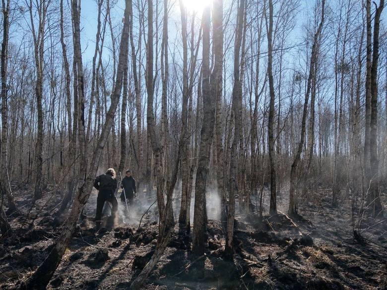 Zdjęcie wykonane w środę w Grzędach (okolice Uroczyska Nowy Świat, rowu spod Polkowa) przez służby terenowe BbNP. Z żywiołem, prócz strażaków, walczą