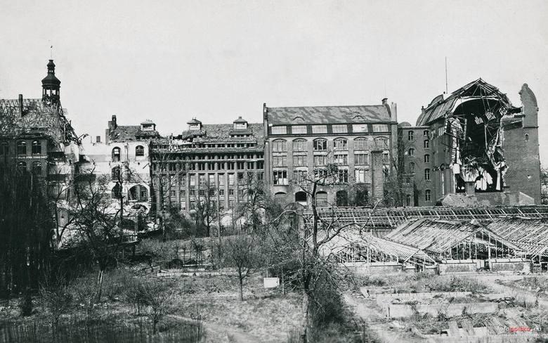 """Widok z ogrodu botanicznego na ruiny Instytutu Zoologicznego, Muzeum Przyrodniczego, piekarni """"Mamut"""" i nieistniejącej już Szkoły Podstawowej"""