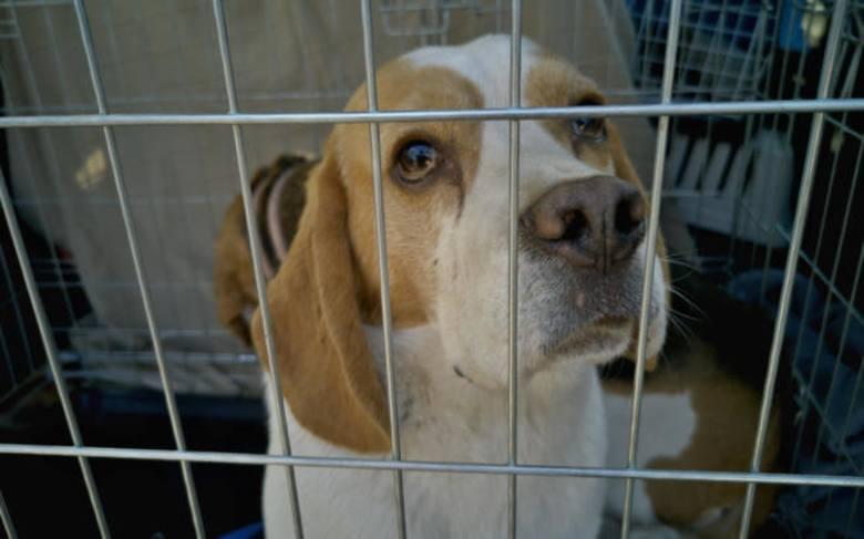 Interwencja Animalsów w Starej Hucie. Chore zwierzęta, bez dostępu do wody i ponad 100 zwłok psów