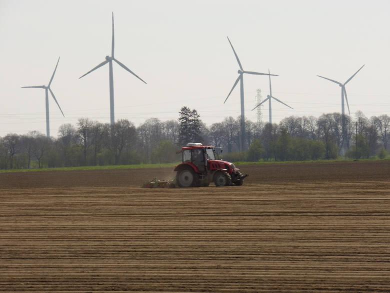 NIK sprawdziła funkcjonowanie spółek hodowli roślin o szczególnym znaczeniu dla gospodarki narodowej. Stwierdziła, że działania na rzecz hodowli nowych