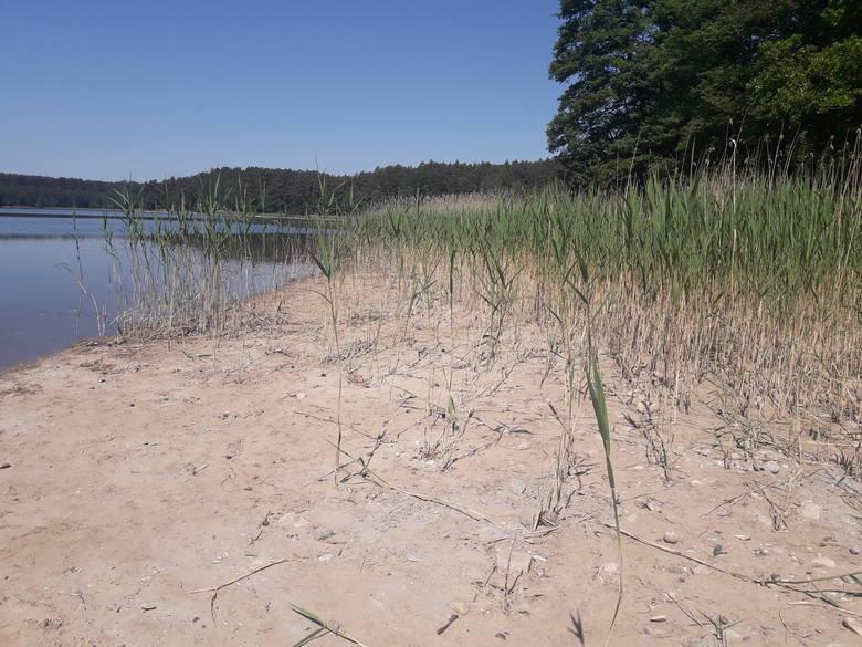 Jezioro Głębokie. Wyraźnie widać żółty piasek, który kilka dni temu był przykryty lustrem wody. Linię lustra widać także na roślinności.