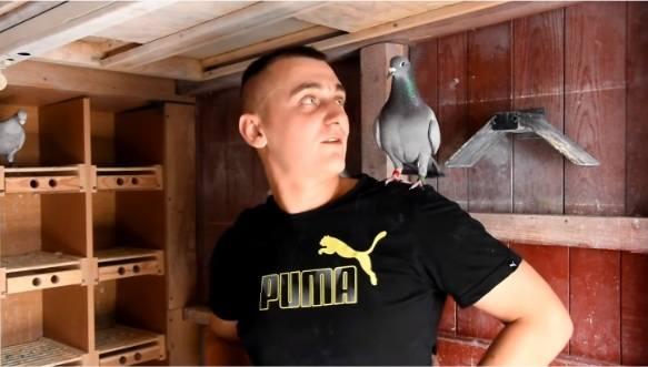 Loty gołębi dorosłych Oddziału Polskiego Związku Hodowców Gołębi Pocztowych dobiegły końca. Od 24 ub.m. odbywają się loty gołębi młodych, gdzie od 2012