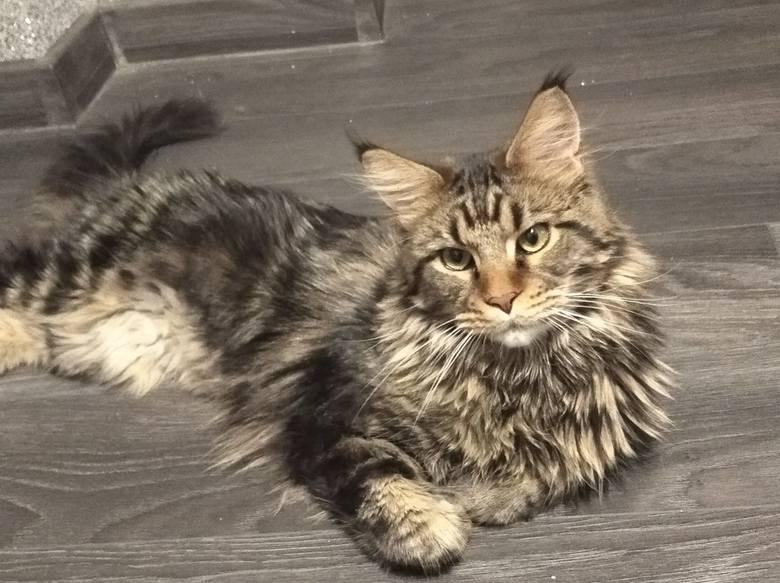 Ostatnio poprosiliśmy Was, drodzy Czytelnicy, o to, abyście pochwalili się swoimi kotami. Nasz apel na Facebooku przeszedł najśmielsze oczekiwania. Dostaliśmy