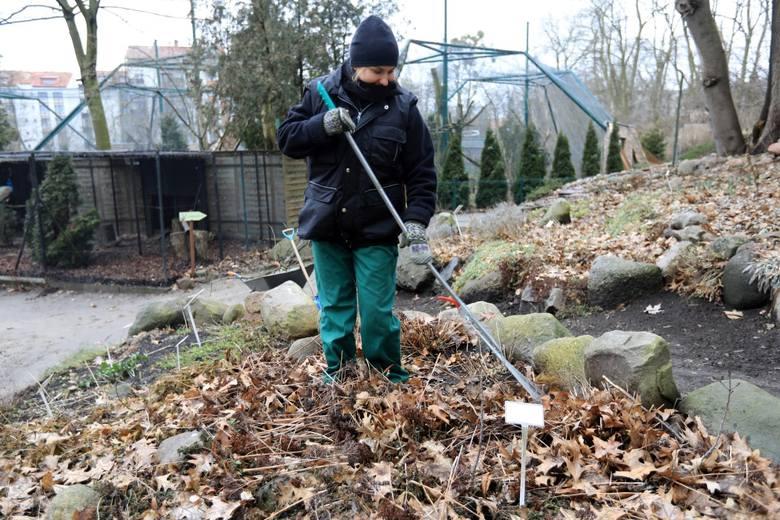 MARZECNa razie w niektórych miejscach w Polsce leży śnieg, ale jeśli pogoda się poprawi,  zdejmujemy z roślin włókninę. Przygotowujemy również grządki