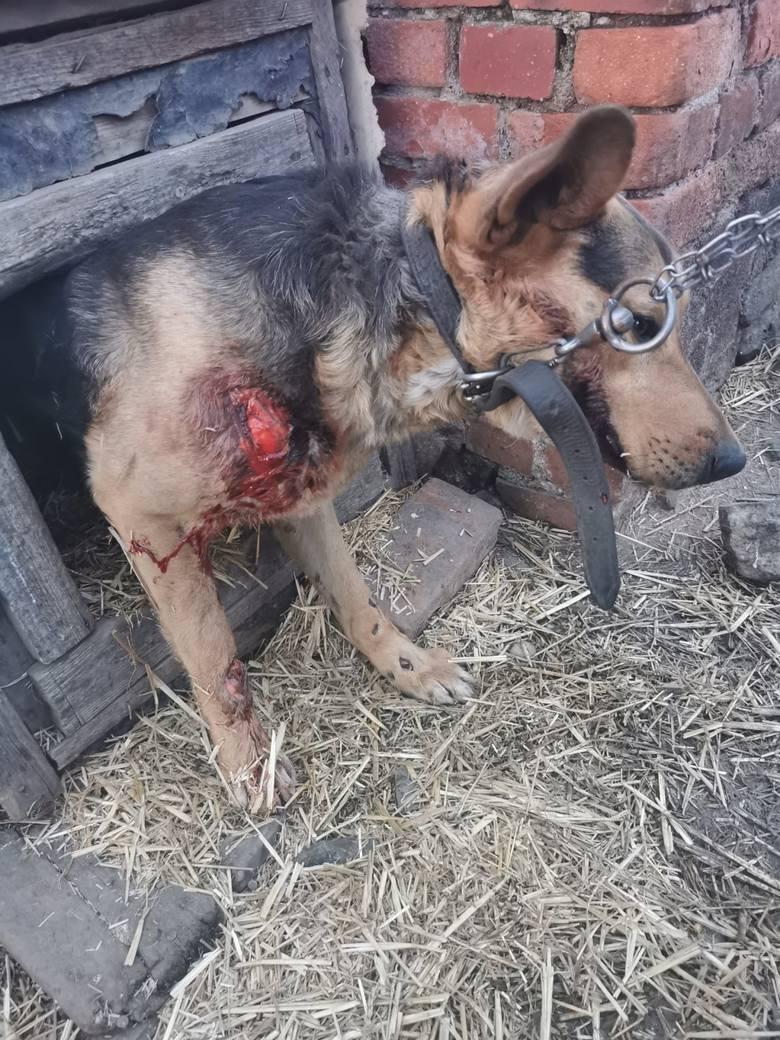 Sołtyska z Dolnego Śląska ciągnęła psa za samochodem. Świadkowie wezwali policję [ZDJĘCIA]