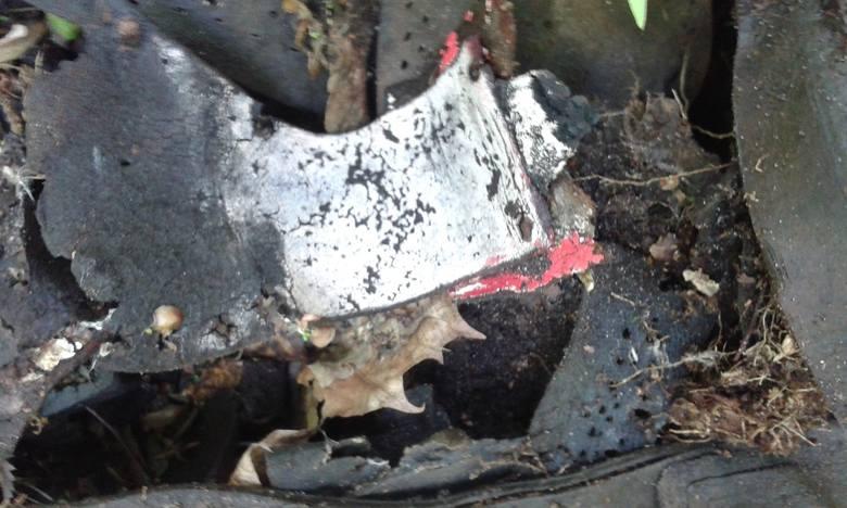 Jesienią 2015 r. w okolicach Muzeum Stutthof w Sztutowie odnaleziono wielkie ilości butów