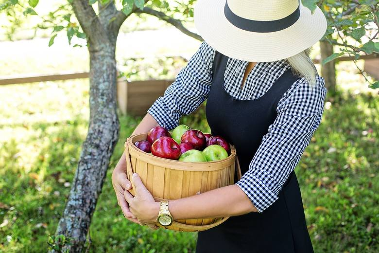 Światowy Dzień Jabłka 2018. Zbiory tych owoców w Polsce mogą być rekordowo wysokie