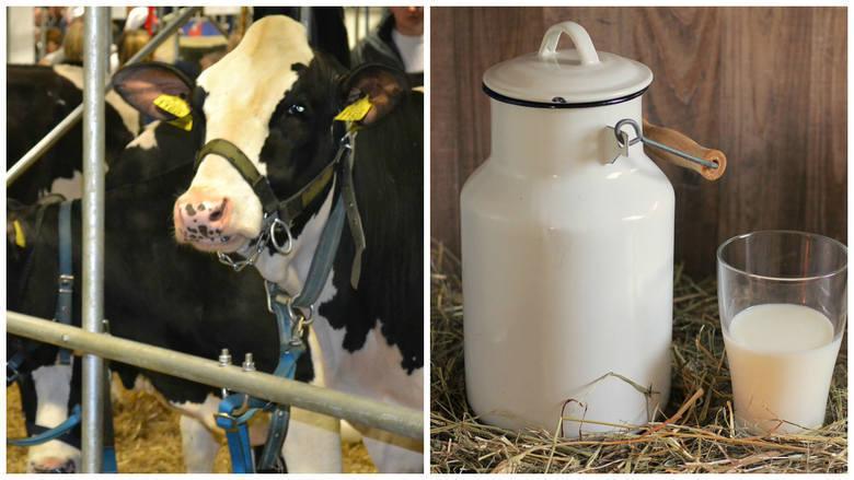 """""""Są ideologie, które mówią, że mleko jest efektem gwałtu na krowach"""" . Minister podczas dożynek prezydenckich 2020"""