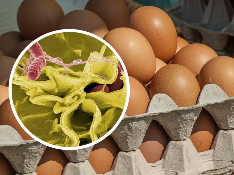 Salmonella jest odpowiedzialna za większość zatruć pokarmowych w Polsce i Europie. W 2015 r.  zarejestrowano ponad 8,5 tys. zachorowań z jej powodu!
