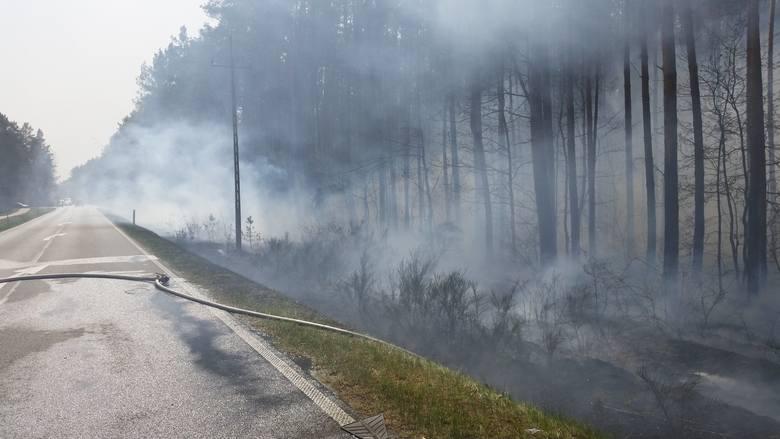 W całym kraju został ogłoszony najwyższy 3 stopień zagrożenia pożarowego. W regionie koszalińskim płoną lasy oraz nieużytki rolne. Strażacy apelują o