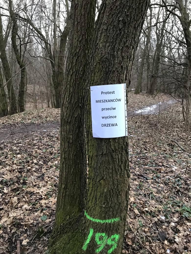 Zdaniem urzędników drzewa wskazane do wycinki są to drzewa, które kolidują z alejkami, często niebezpiecznie pochylone w światło alejek, w dużej mierze chore czy powalone.<br /> <br />