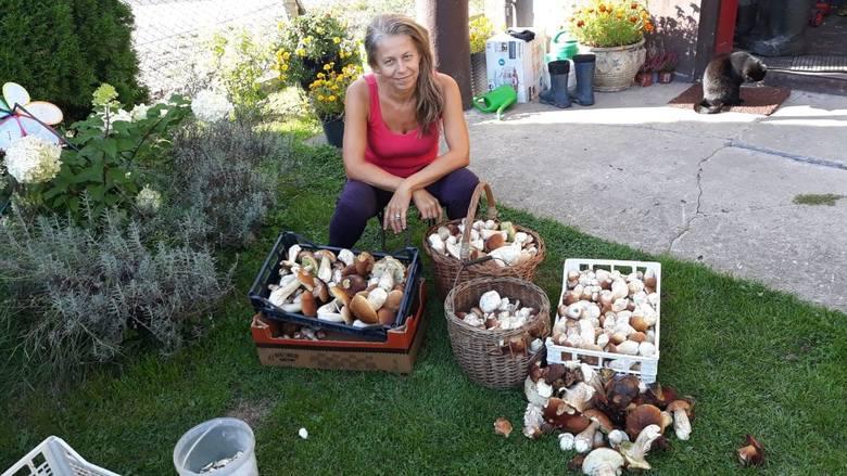 Trwa jesienny wysyp grzybów. Borowiki można znaleźć niemal wszędzie. Ale to ostatnie chwile obfitości. Zdaniem leśników wszystko wskazuje na to, że za