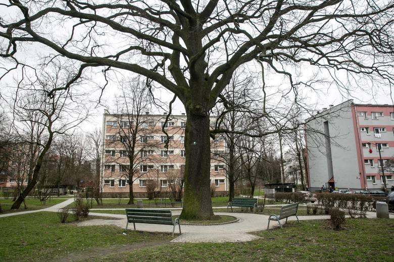 Dzielnica III Prądnik Czerwony – Lokalizacja parku to ul. Celarowskiej. Motywem przewodnim będzie rosnący tam dąb szypułkowy, który uznany został za