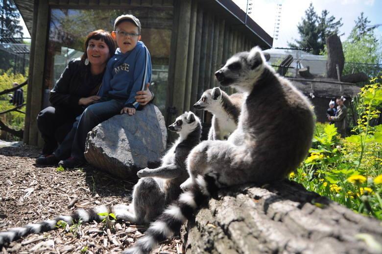 Prezydent Opola proponuje, aby bilety do zoo zdrożały o 3 zł. O biletach rodzinnych nikt nie pomyślał.