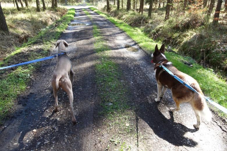 Polacy coraz chętniej rekreacyjnie korzystają z lasu. Szczególnie w ostatnich tygodniach lasy stały się miejscem, gdzie przy zaostrzonych reżimach sanitarnych,