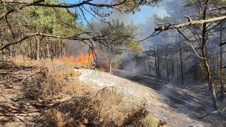 W czwartek w Nadleśnictwie Choczewo spłonęło 20 arów terenów leśnych