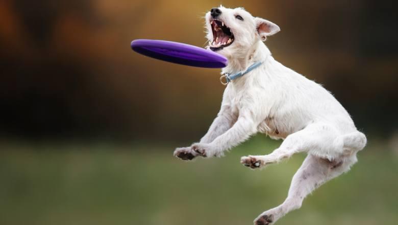 Twój pies roznosi ci mieszkanie? Dzięki tym aktywnościom się uspokoi... A ty schudniesz kilka kilo