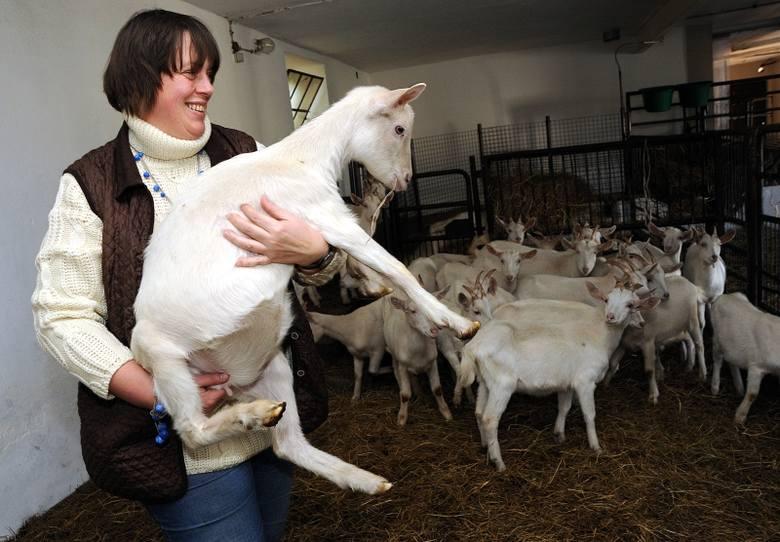 """""""Kozi Gródek"""" uznano za jedno z 60 pokazowych gospodarstw ekologicznych w Polsce."""
