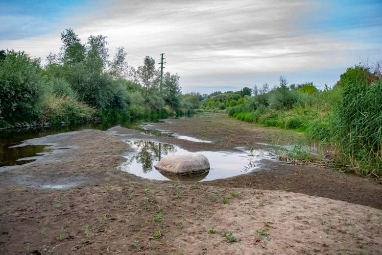 Na odcinku Cybiny od wiaduktu kolejowego na Ostrowie Tumskim do ujścia rzeki stan wody jest bardzo niski. Cybiną można praktycznie przejść. Co więcej,