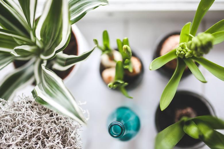 Jak pozbyć się smogu w domu? 10 roślin oczyszczających powietrze z toksyn