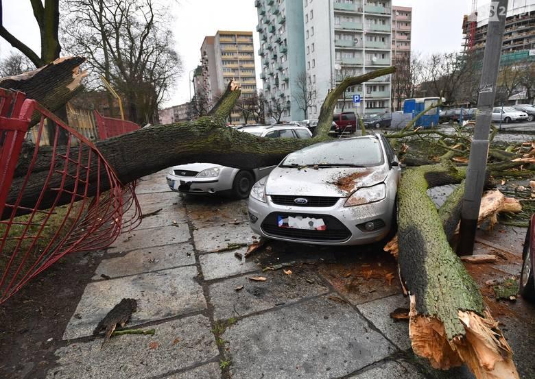 Wichura nad Szczecinem [4.03.2019 r.] Drzewa łamały się jak zapałki [WIDEO, ZDJĘCIA]