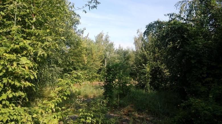 Jak na razie, działka przy ul. Piłsudskiego zarasta zielenią.
