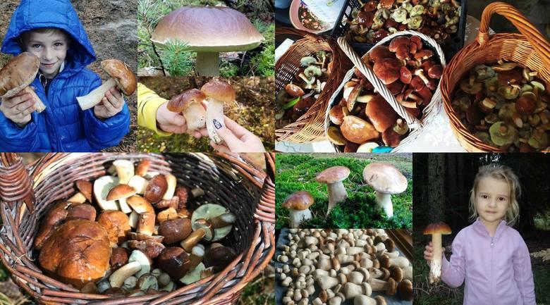 Zbieranie grzybów to dla niektórych odskocznia i forma relaksu, a dla innych rodzaj pracy czy sezonowego hobby. Wszak nic tak nie ładuje naszych baterii,