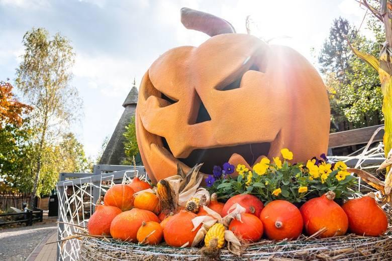 Od piątku 11 września do niedzieli 13 września w powiecie ostrowieckim imprezą numer 1 jest Święto Dyni w Bałtowie. Dzieje się też w Ostrowcu Świętokrzyskim.